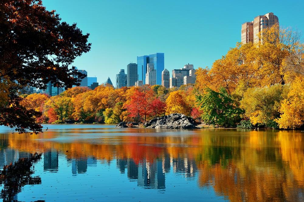 Vue de central park New York