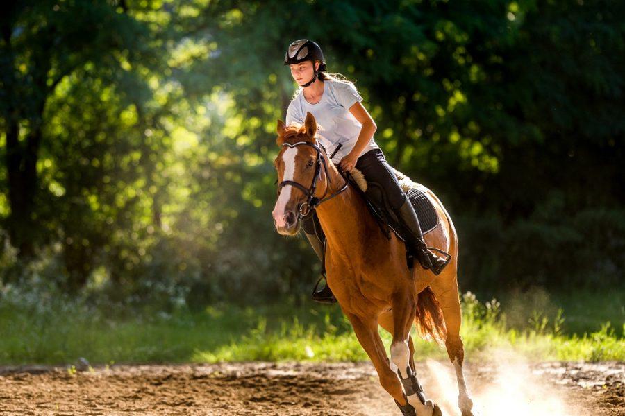 5 conseils pour vous améliorer en équitation