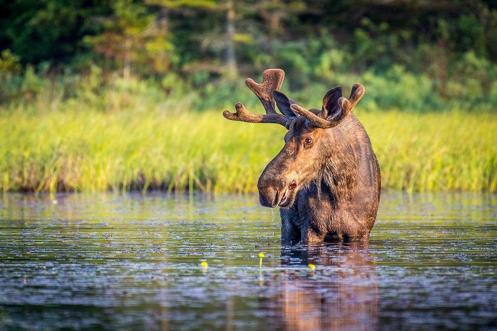 caribou sejour canada
