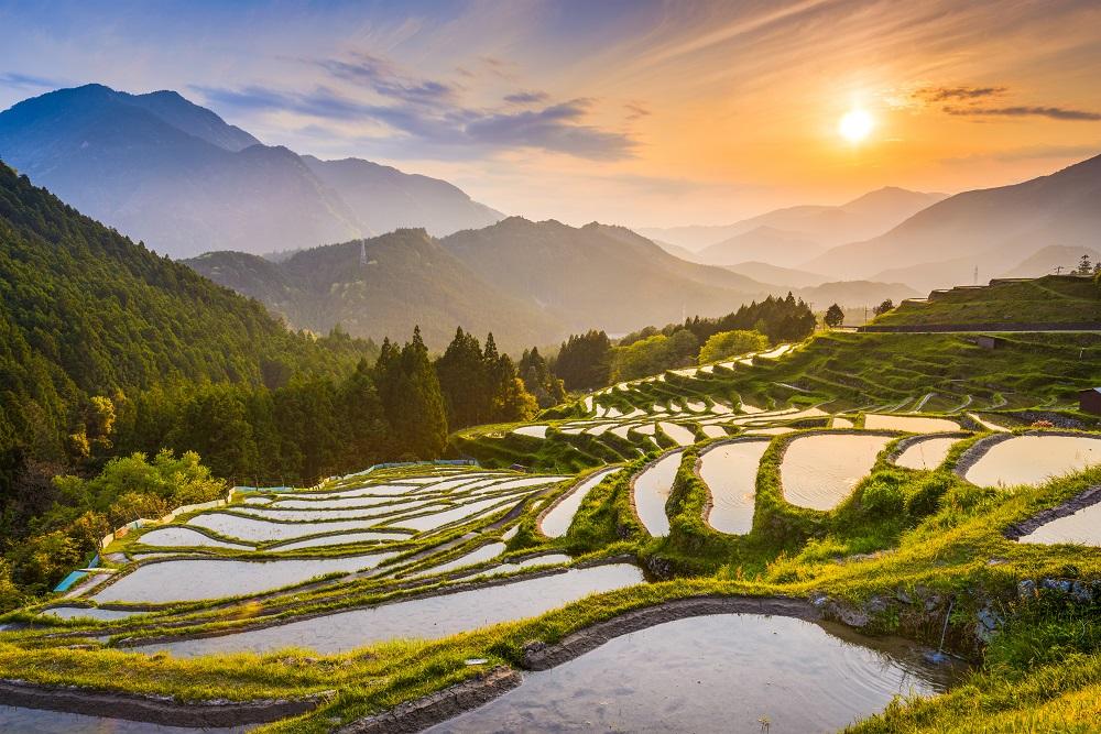 Coucher de soleil devant des rizières au Japon