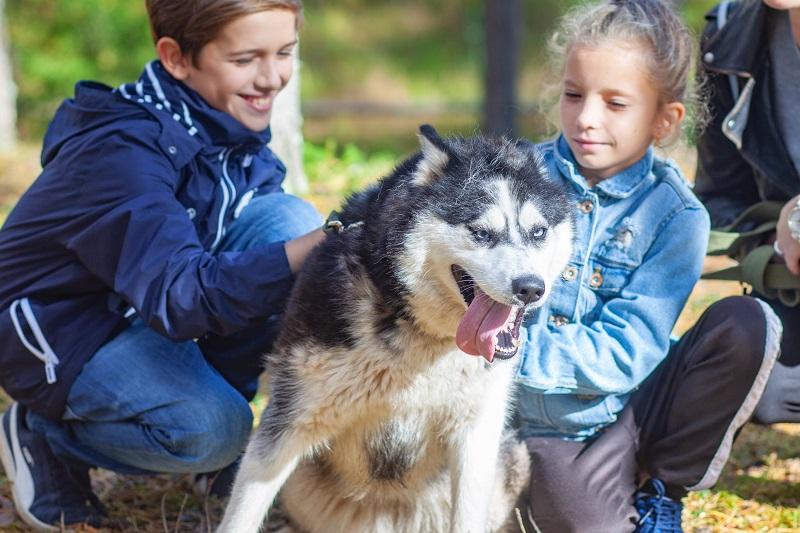 Jeunes enfants avec un chiens Husky