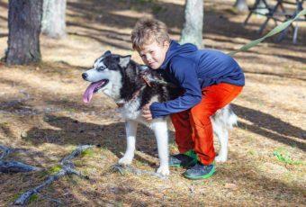 Tout savoir sur la cani-rando, la balade avec des chiens